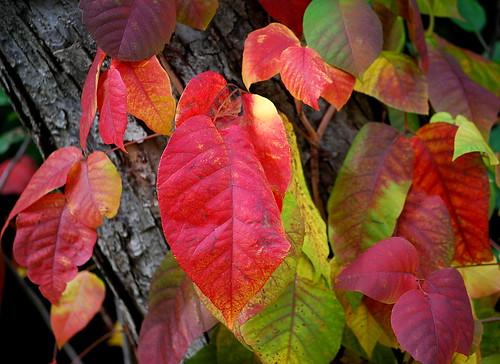 fall colors 11