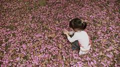 carpet of petals - 花びらの絨毯