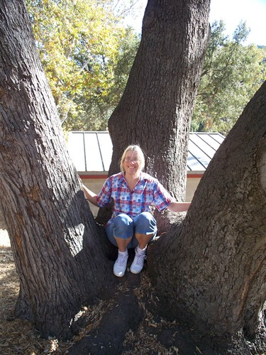 me and the tree