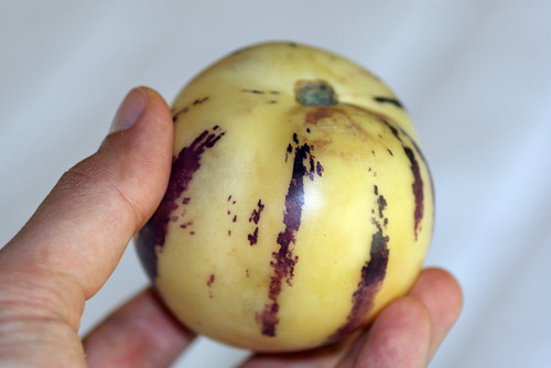 Pepino - Solanum muricatum (Solanaceae)