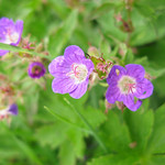 Flower Yorkshire Dales