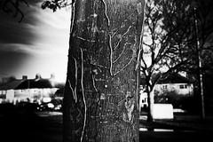 remains (monkeyfinger) Tags: cambridge blackandwhite highcontrast provoke silverefexpro dg008