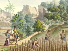 Mannakilo' Rule While the Mannakpapa Labor