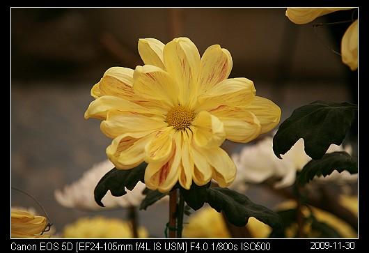 20091130_29