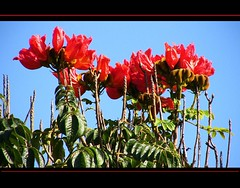 Brasilien-Iguassu - nach oben (roba66) Tags: park flores flower nature brasil nationalpark flora blossom natur flor pflanzen natura brasilien iguazu natures iguacu iguassu blüten flori colorphotoaward natureselegantshots mimamorflowers iguassufloraundfaunaimuamregenwaldupark roba66 iguassuwasserfall
