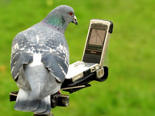 The Homing Pigeon Has SatNav