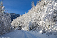 Old Cascade Highway - Scenic, WA (DWHonan) Tags: winter snow firstsnow stevenspass cascaderange oldcascadehighway