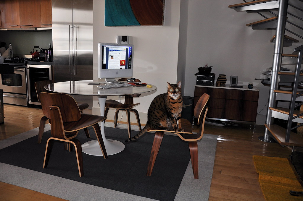 home office (and my co-worker Willy)