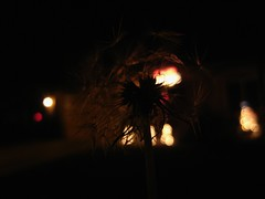 If I Never Wish (alexisjeanette) Tags: christmas winter night lights december bokeh wish sooc