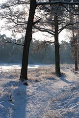 WinterOisterwijk2010-47 (Joris Leermakers) Tags: winter sneeuw oisterwijk januari2010