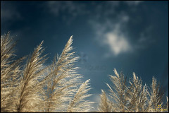 Suavidade // Suavity (Adriano Aquino) Tags: tenderness gentileza gentleness suavidade suavity