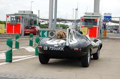 Jaguar D-Type (D's Carspotting) Tags: jaguar dtype france coquelles calais green 20100613 le mans 2010 lm10 lm2010 739bkk replica