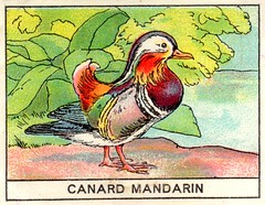 mart oiseaux117