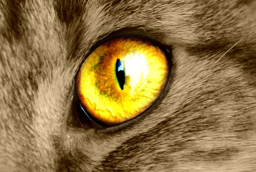 yellowish cat eye