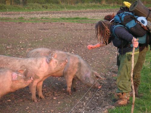 girls-pig-awbridge5