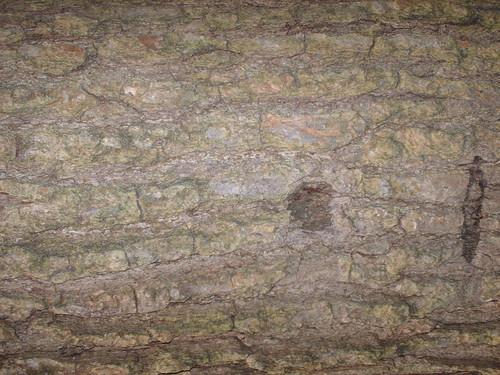 DesignM.ag Bark Texture - 13