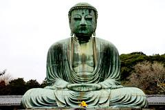 Daibutsu, the great Buddha of Kamakura, Japan (fabriziogiordano23) Tags: travel holiday statue japan asia buddha kamakura great daibutsu nippon statua japon soe giappone ohhh wow1 beautifulphoto totalphoto flickraward flickrestrellas spiritofphotography
