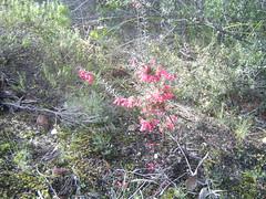 064.Colorful heath (don.warner) Tags: lorne piertopub winterpiertopub
