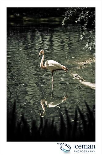 London Zoo 045