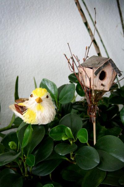 bird&house