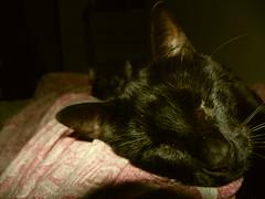 Txundarata, blind but beautiful (Ardi Beltza) Tags: portrait pet black cat eyes blind sweet retrato no negro bigotes whiskers ojos gato sin gata ciego