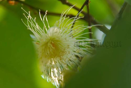 na5wa: taman flora dan fauna