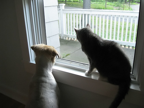 Dogs and cats living together.