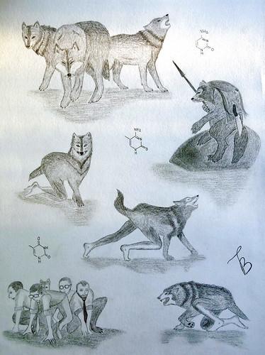 Metamorphosis (Enigma911) Tags: animal werewolf wolf drawing evolution human fantasy dna packofwolves genetics metamorphosis 動物 mutation 絵 人間 狼 животное 進化 волк оборотень эволюция мутант 遺伝 метаморфоза мутация