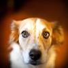 Sit Boy (Thomas Hawk) Tags: california usa dog losangeles unitedstates 10 unitedstatesofamerica freckles southerncalifornia fav10 gettyartistpicksoct09