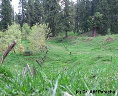 Mushkpuri Top (Atif Paracha) Tags: green nature nathiagali mushkpuritop