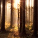 illuminated forest by aspheric.lens