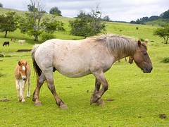 Pasieran 2009 076 (Joxefe Diaz de Tuesta) Tags: horse primavera nature canon cheval spring mare country natura blonde alava basque printemps euskalherria colt euskadi paisvasco araba zaldia udaberria moxala behorra josefelixdiazdetuesta atauri legaire opakualegairearabaeuskadi2009