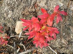 P1060261 (tifranta) Tags: fall water leaves mushrooms moth fungus lilypond beaversign meadepond
