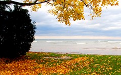 Lake Ontario Webster NY (blmiers2) Tags: blue autumn trees sea sky lake newyork seascape color tree green fall nature water beautiful leaves yellow clouds season landscape geotagged leaf cool nikon october colorful seasons fallcolors branches lakes autumncolors fallfoliage foliage faves lakeontario webster inlandlake websterny ontariofishing lakesontario blm18 blmiers2