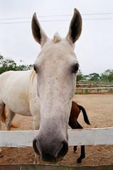 Mame (Marcelo M P Mariano) Tags: horses foto sp e cavalos clube nikonf80 fotoclube sigma2470mmf28dgmacro urbanova fisp fujicolorprovalue200 sojosdoscampossp hpicaunivap wwwmarcelompmarianocombr