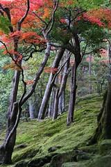 IMG_7538.jpg (Heliolustrious) Tags: trees leaves japan garden temple kyoto autum ginkakuji jishoji