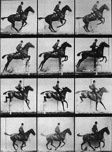 442px-Muybridge_horse_jumping