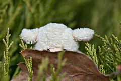Peekaboo I see you (Singing With Light) Tags: street nyc november autumn ny green pine leaf sheep pentax peekaboo magnet 2009 fridgemagnet jjp photochallenge k200d photochallengeorg bahbahra 2009challenge 2009challenge329 brownpeekaboobahbahra20092009challenge2009challenge329autumnjjpk200dnynycnovemberstreetfridgemagnetpentaxphotochallengephotochallengeorgsheepmagnet
