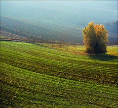 Golden October (Katarina 2353) Tags: autumn sunset tree green film nature fog landscape photography golden nikon europe peace image serbia paisaje fields paysage priroda valleys vojvodina srbija tjkp vajdasag pejza katarinastefanovic katarina2353 gettylicense