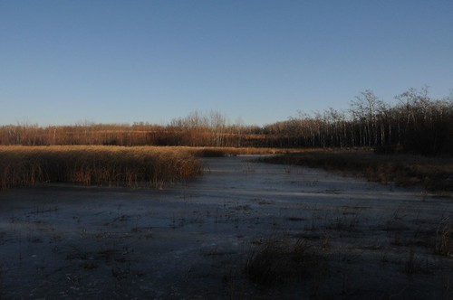 Lake level near road