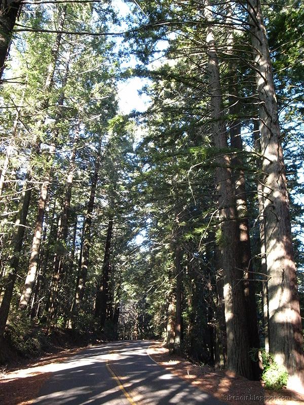 Ridgecrest near Bolinas Ridge