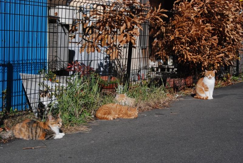 5cats