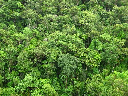 forests jungle nature texturas green Atlantic aéreas trees Brazil conservation