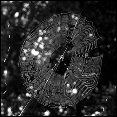Deadly Wonder (photo_secessionist) Tags: light bw sun slr 120 6x6 film analog mediumformat spider blackwhite web ukraine bn kiev shining mybackyard arsenal ilford fp4 киев ussr cccp salut selfdeveloped салют autaut saluts салютc vega12bf2890mmlens арсенала украин