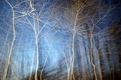 secret demon (OnkelChrispy) Tags: blue trees shadow fog night duck ghost spirits demon mists spectres