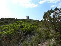 Montée à la tour de Capu Neru : sur le sentier