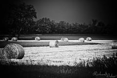 Sheaves of corn.. (Richard Weber (1.000.000 views)) Tags: wallpaper campagna campo fieno moena wow1 flickraward mygearandme rizzoweb