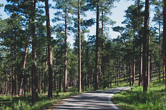 A Road Between Trees (wenzday01) Tags: road travel trees nature southdakota blackhills vanishingpoint nikon driving sd nikkor d90 nikond90 18105mmf3556gedafsvrdx