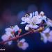 delicacies of Spring