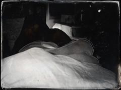 night poses... (bunchadogs & susan [fell down,broke rib]) Tags: iphone hipstamatic chaithesmoothsaluki nighttime fortunacalifornia